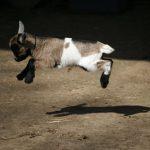 Et hop ! Hop !