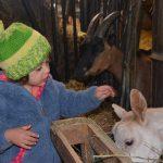 Caresser une chèvre