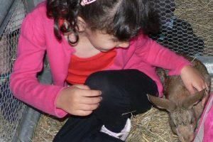 photo activite lapins